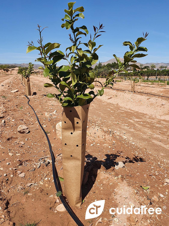 protectores biodegradables CÍTRICOS