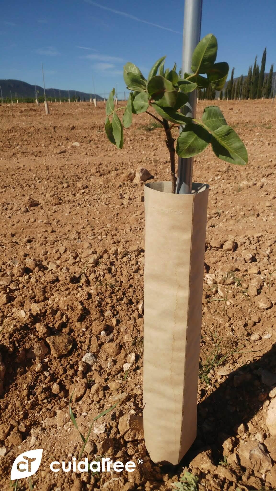 protectores biodegradables PISTACHO